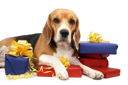 Dog Gifts